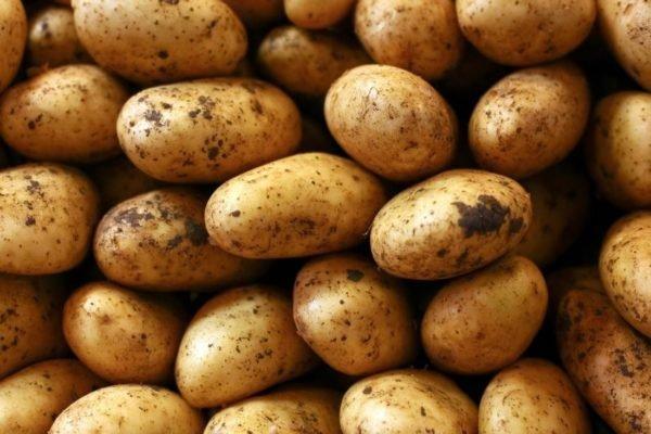 Organski krompir zuti