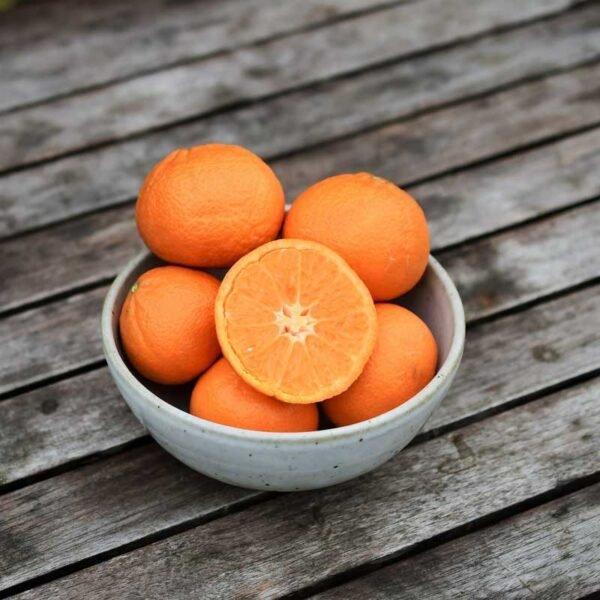 organske mandarine