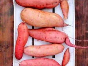 Organski Batat (slatki krompir) Rozi 500g