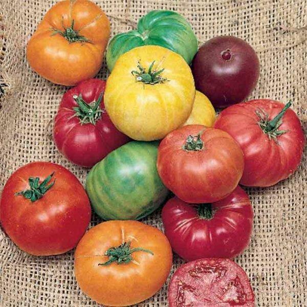 organski paradajz mix bio salas idei 500g
